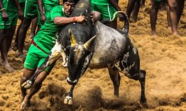 Why are so many Tamilians supporting #Jallikattu ? Here is a Well Written Article From Quora